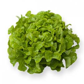 Насіння салату дуболисного