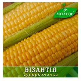Насіння кукурудзи цукрової Орлан (Візантія) F1 (середньоранній 78–80 днів)