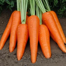 Насіння моркви Абліксо F1 (Ablixo)