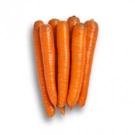 Насіння моркви Крофтон (Crofton RZ) F1