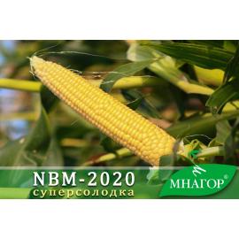Насіння кукурудзи цукрової NBM-2020 F1 (середньостиглий 75–78 днів)