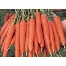 Насіння моркви Магно (Magno RZ) F1 Нантеc тип 120 дн.