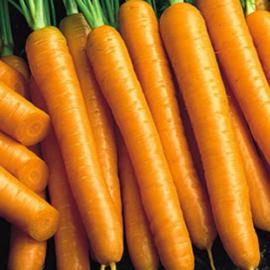 Насіння моркви Карведжо F1 (Carvejo)