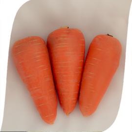 Насіння моркви СВ 3118 ДХ (SV 3118 DH) F1