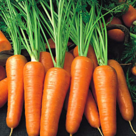 Насіння моркви Ройал Шансон (Royal Chanson)