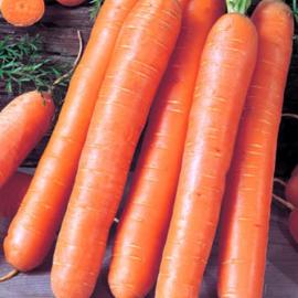 Насіння моркви Ройал Форто (Royal Forto)