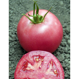 Насіння томата Пінк Унікум F1 (Pink Unicum)