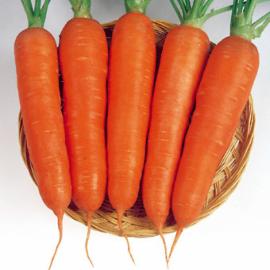 Насіння моркви Вікторія F1 (Victoria)